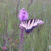 May Prairie