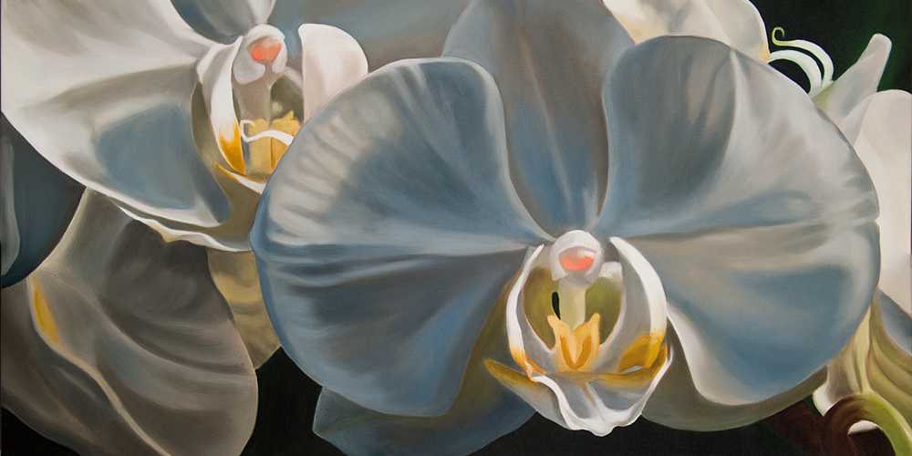 Evening orchid, 37.5x28