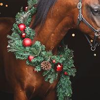 Christmas-4564_edited.jpg