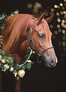Christmas-4523 v2.jpg