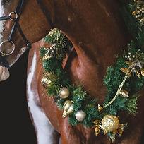 Christmas-5698_edited.jpg