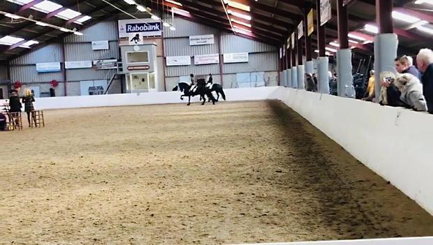 Cor B. at a horse show
