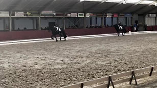 Cor at a stallion competition