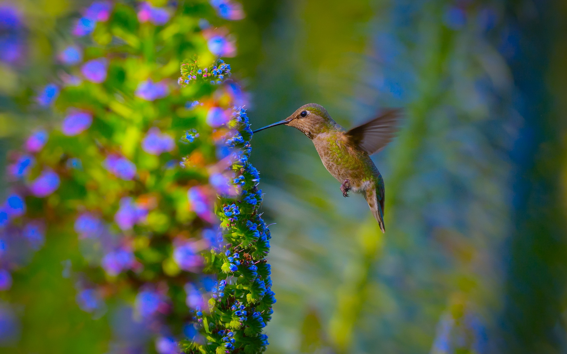 Hummingbird-Garden-Nature-Bird