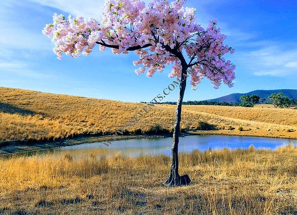 Large Pink Cherry Blossom Tree