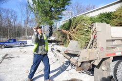 Christmas-tree-removal-in-the.jpg