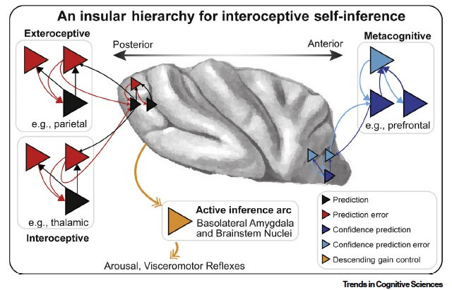 NEW PUBLICATION IN TICS! DEVELOPING THE METACOGNITIVE AND INTEROCEPTIVE SELF-INFERENCE (MISE) MODEL.