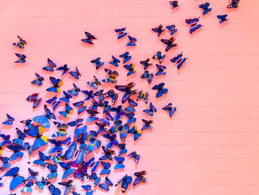 Papillonner en toute sécurité