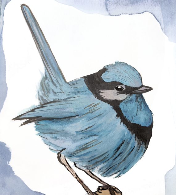 Spicy Blue Bird