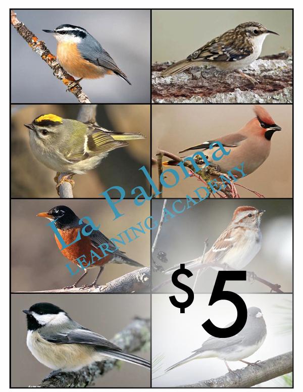 64 Birds