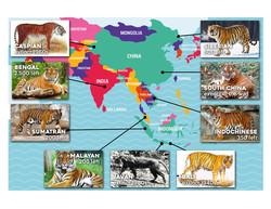 sci tigers