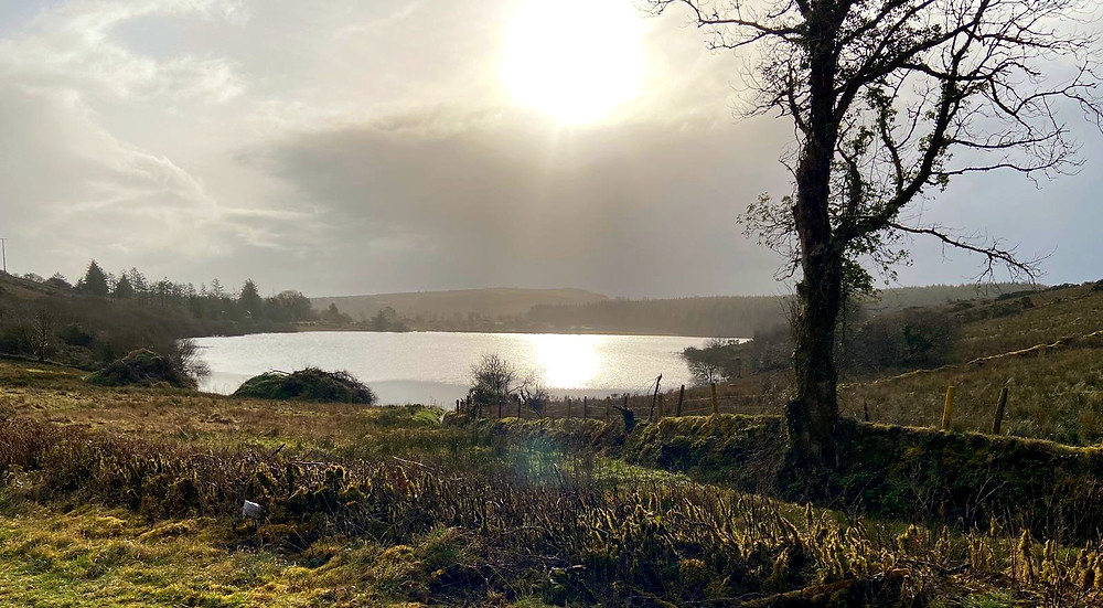 Silver lake in centre, bare tree to right, sun burst over clouds, grassy field and cropped hedge in foreground
