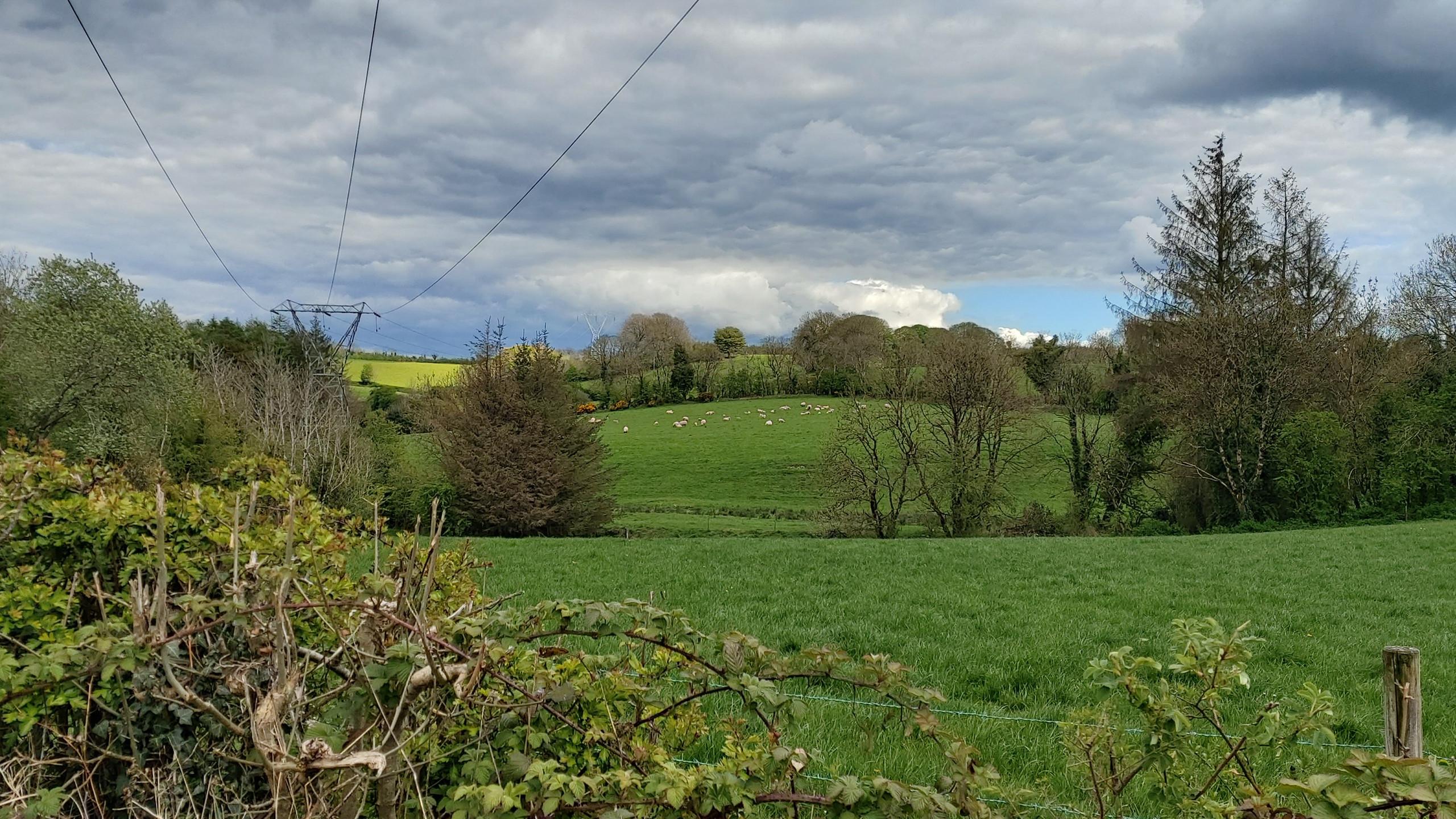sheep grazing on hills