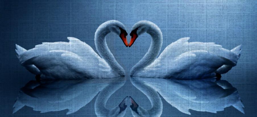 The Swan in Irish Mythology
