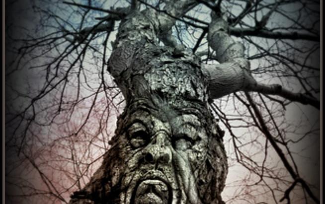 Tree Lore in Irish Mythology| Guardians of the 5 Provinces