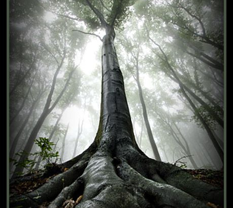 Irish Tree Lore – The Hawthorn