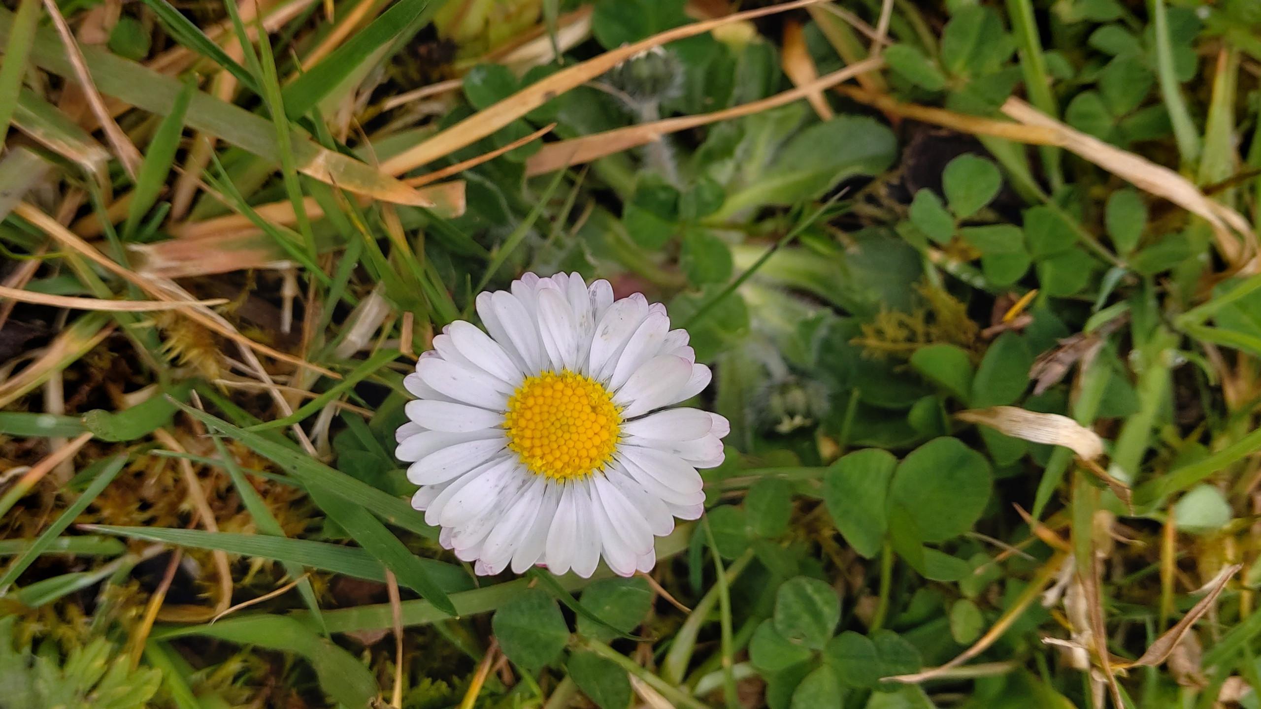 delightful daisy