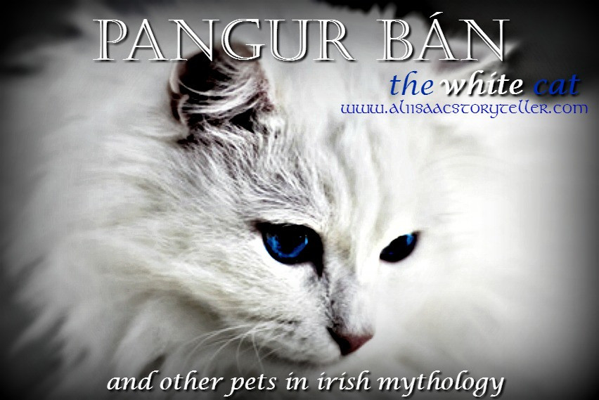 pangur-ban, face of fluffy white cat with blue eyea