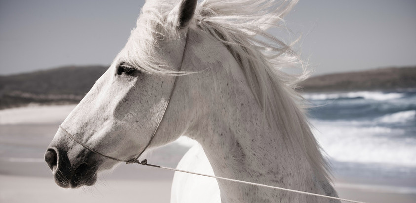 The White Horse in Irish Mythology