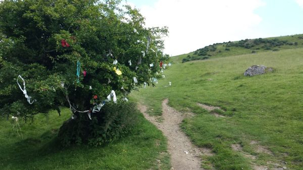 Hawthorn tree on a hillside at Loughcrew, covered in rags and momentos