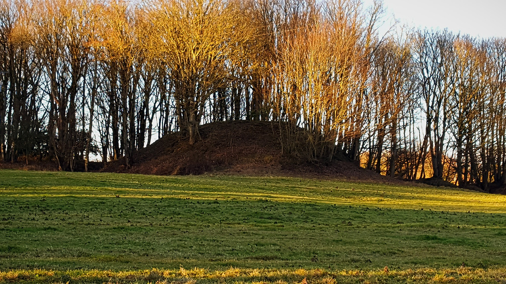 Mound covered with trees.