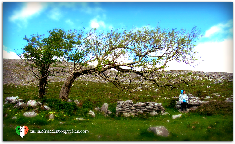Fairy tree at St Colman's Holy Well