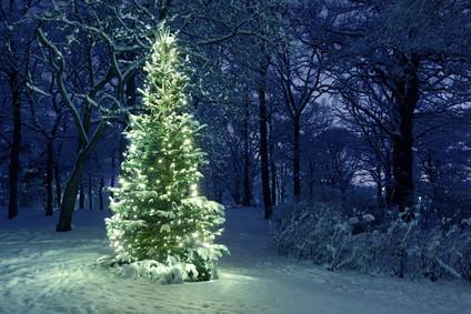 5 sacred symbols of #christmas & their pagan origins