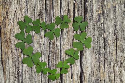 Shamrocks laid out on a plank of wood in a heart shaped design