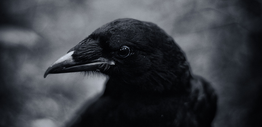 The Crow in Irish Mythology