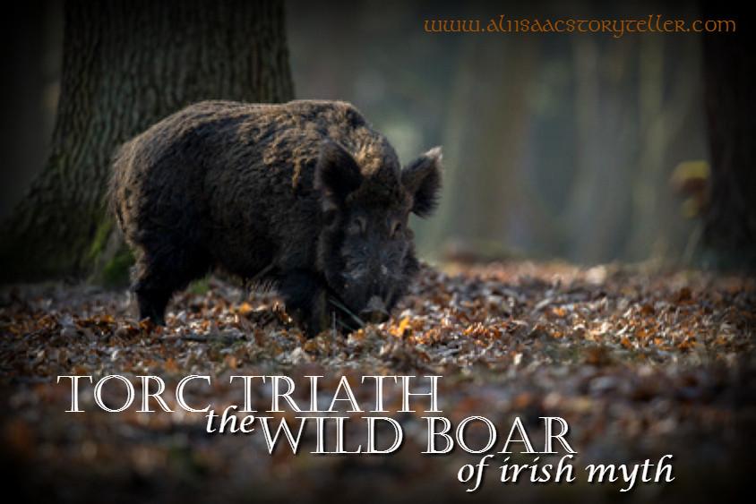 wild-boar2