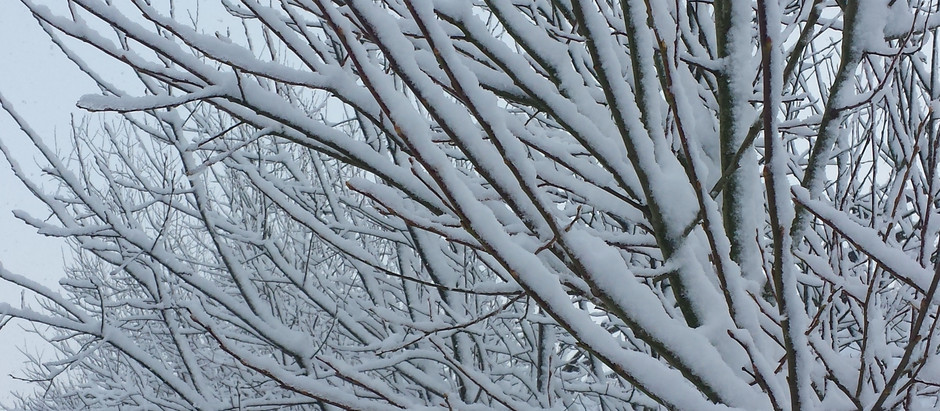 Winter Willows | A Poem