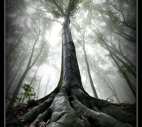 Sacred Trees of Ireland | The Yew