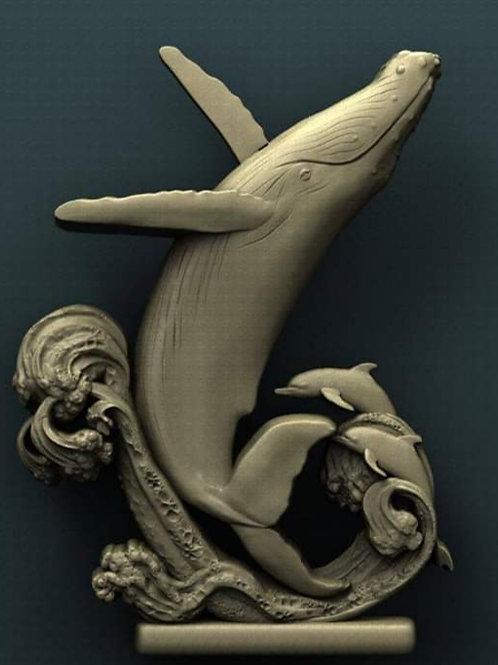 Humpback & Dolphins