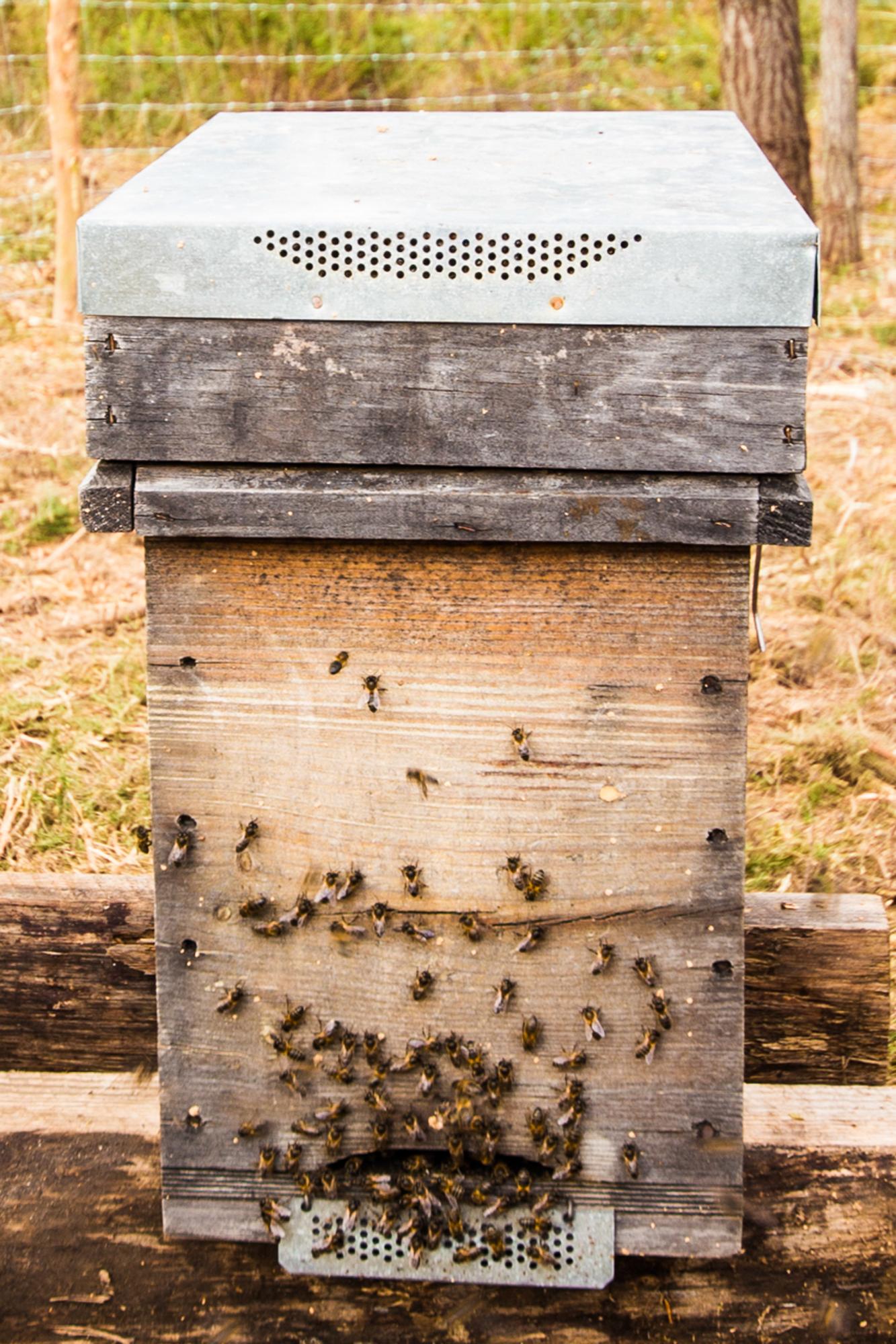 QEM - Abelhas e outros insectos