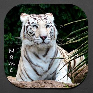 WHITE TIGER 4-PC COASTER SET