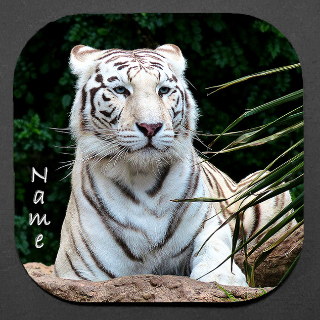 WHITE TIGER 4-PC COASTER SET