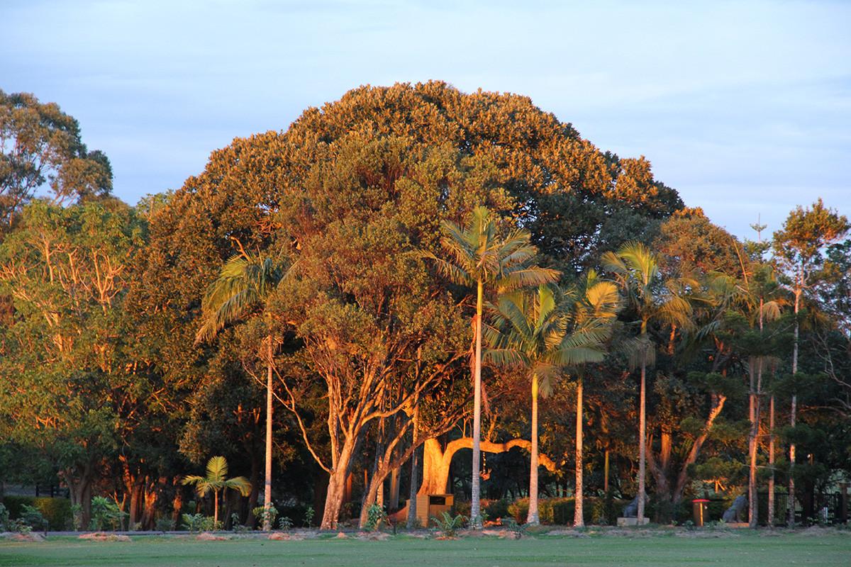 XLR garden-vegetation.jpg