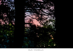 Pastel-EliaTachella-2015.jpg