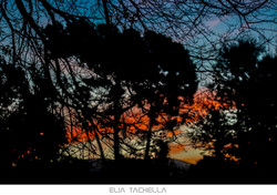 Naranjas-EliaTachella-2015.jpg