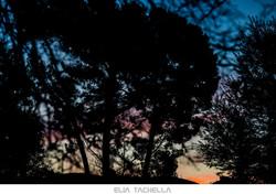 Blue-EliaTachella-2015.jpg