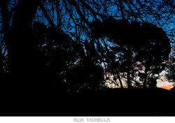 Black-EliaTachella-2015.jpg