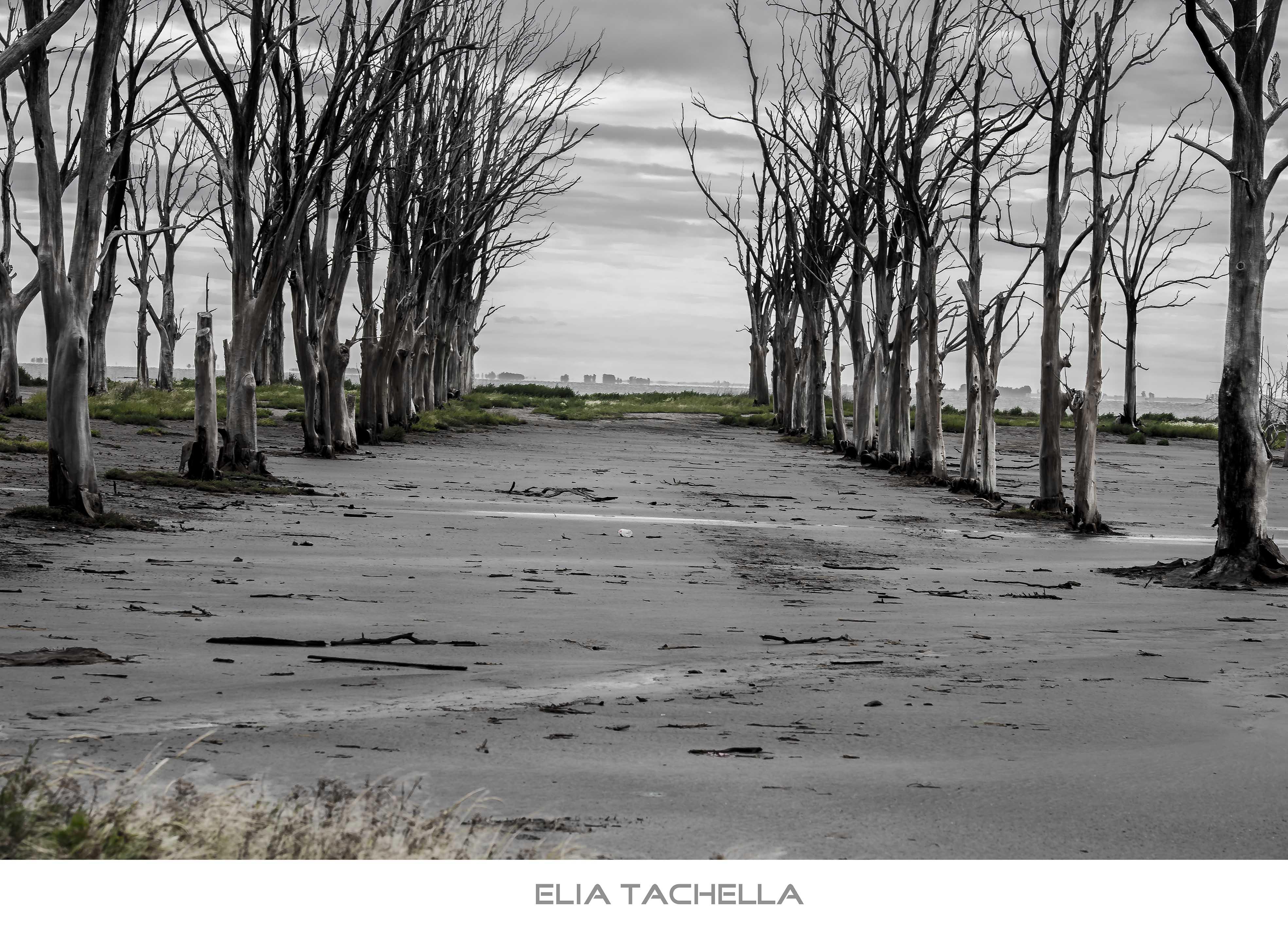 MirandoLoGris-EliaTachella-2014.jpg