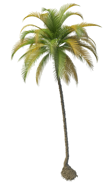 coconut_tree.png