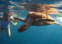 deadmans_reef_snorkeling2 (1).jpg