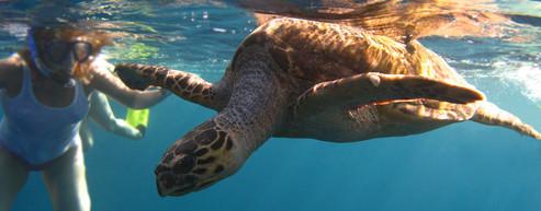 Scheduled Post Turtle Explorer.jpg