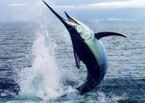 nassau_fishing_charter2.jpg