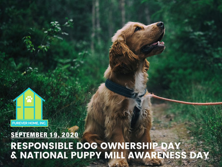 LET'S BARK UP AWARENESS!