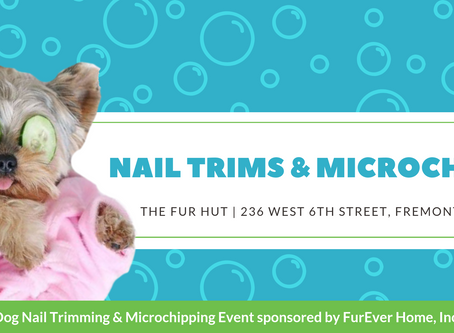 NAIL TRIMS & MICROCHIPS AT THE FURHUT