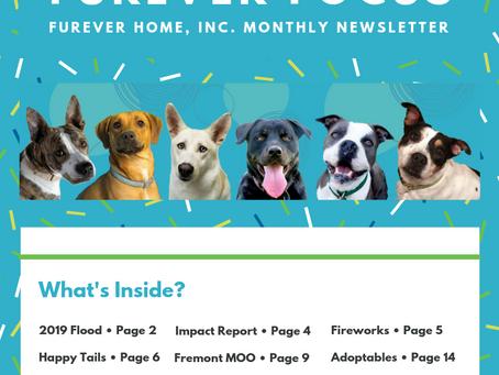 FurEver Focus Newsletter - Summer 2019