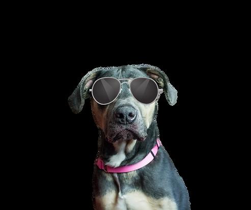 Dog (1).png